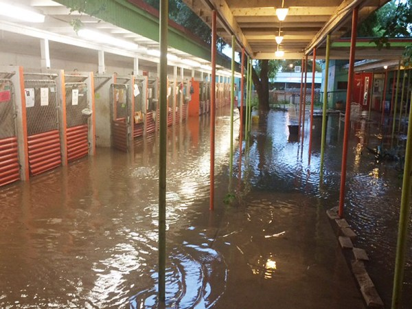 Austin Pets Alive flooded shelter