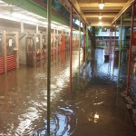 How to Help Animal Shelters and Rescues Affected by Texas Floods