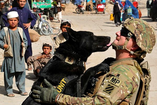 military dog kissing soldier