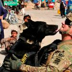 Congress Votes to Return Military Dogs to US and Reunite Them with Handlers