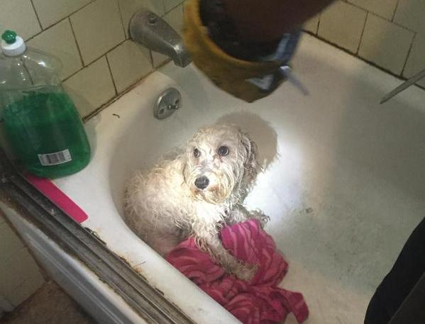 Firefighters Save Poodle With Paw Stuck In Bathtub Drain