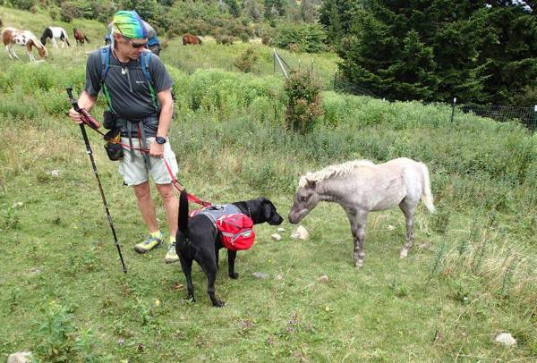blind hiker Trevor Thomas and guide dog Tennille with pony