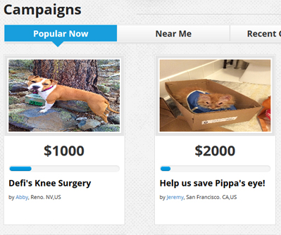FundMyPet campaigns