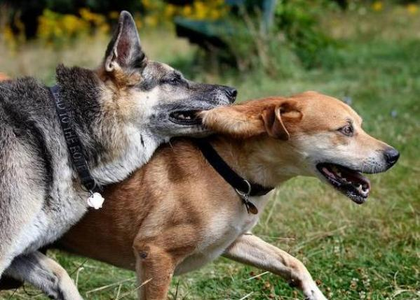 katrina dogs hurricane and storm reunite