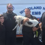 Pit Bull Survives 200-foot Jump Thanks to Emergency Responders
