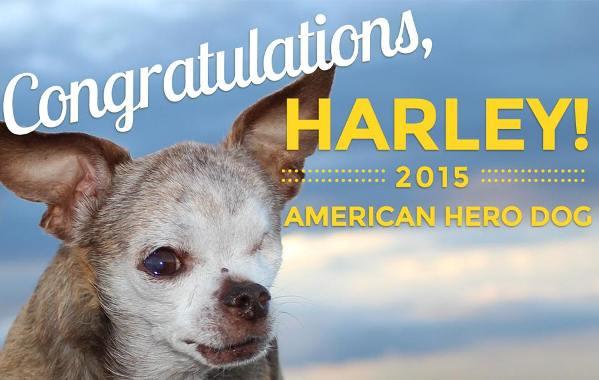 Harley 2015 American Hero Dog winner