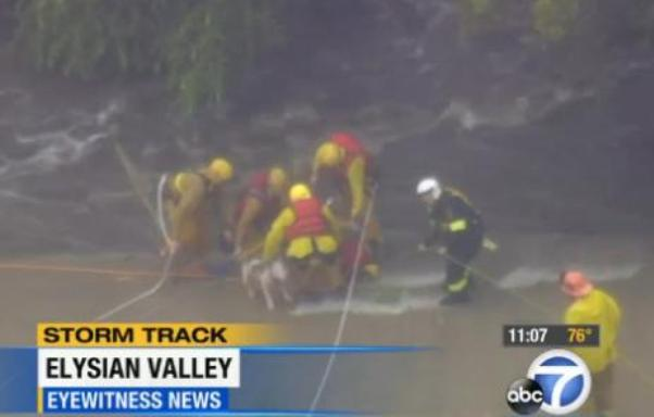 dog rescued from tree above los angeles river
