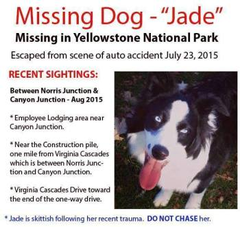 Jade missing dog poster Yellowstone