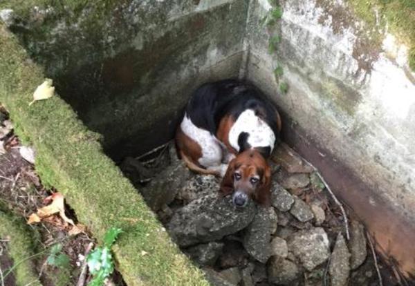 Phoebe Basset Hound trapped in Washington cistern