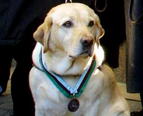 Roselle guide dog saved blind man 9/11