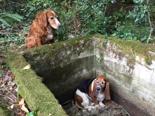 Tillie and Phoebe Washington cistern