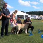 Deputy Saves Mastiff from Burning Car at AKC Dog Show