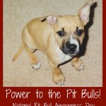 Let's All Spread Pittie Positivity on National Pit Bull Awareness Day