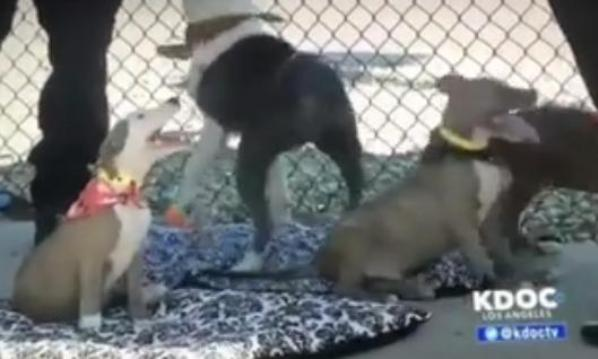 recovery of emaciated dogs at Downey shelter