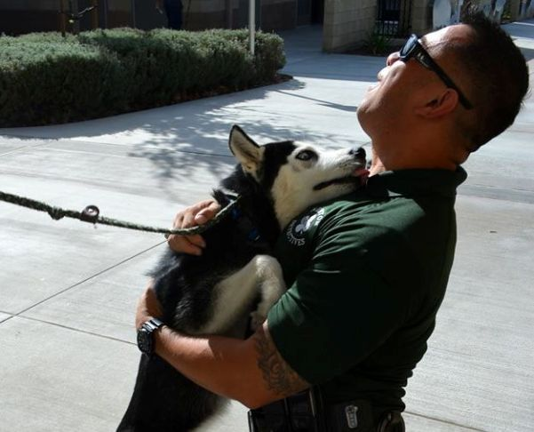Mike Ventura adopts Chip husky in car chase