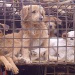 6 People Die After Eating Dog Meat in Cambodia