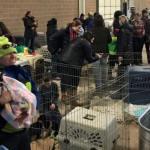 After Truck Crash, Colorado Volunteers Help 100 Stranded Rescue Dogs