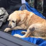 Two Dogs Survive Two Days in Rubble After Texas Tornado
