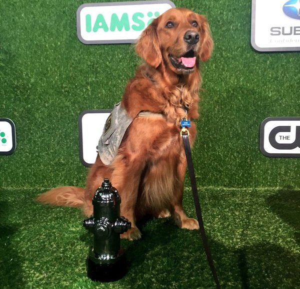 Gabe 2016 World Dog Awards Dog of the Year
