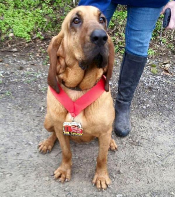 Ludivine dog finishes half marathon
