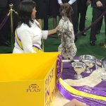 Arftung! German Shorthaired Pointer Wins Westminster Best in Show Title