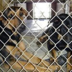 Oklahoma Shelter (Legally) Euthanizes Dogs with a Pistol