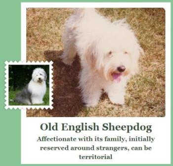 fetch app old english sheepdog