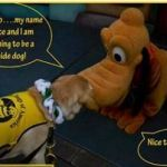 Watch a Guide Dog in Training Get Schooled by Pluto at Disneyland