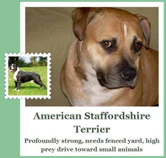 fetch app dog breed american staffordshire terrier