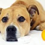 For First Time Ever, OTC Medications Top ASPCA's List of Pet Toxins