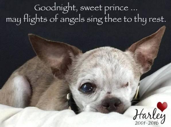 Harley American Hero Dog rest in peace