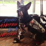 Military Hero Dog Will Be Parade's First Fur-Legged Grand Marshal