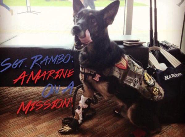 Rambo hero military dog parade grand marshal