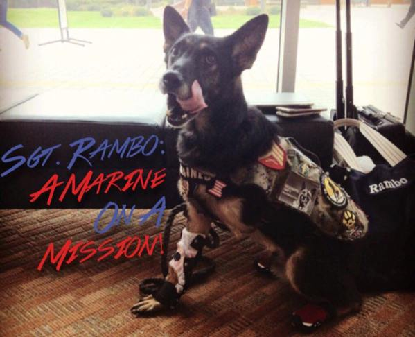 Rambo hero military dog parade grand marshal