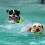 6 Ways to Keep Your Dog Safe in Hot Weather