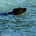 Injured German Shepherd Puppy Rescued by Boaters