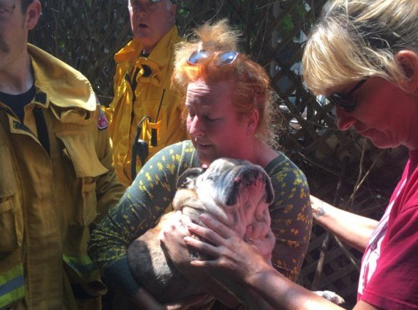 Angus 14-year-old Bulldog rescued from well