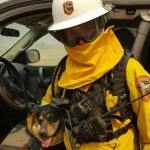 Dog Runs from Burning House in California Wildfire and Leaps into Firefighter's Arms