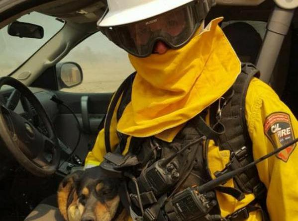 dog in Blue Cut wildfire jumps into firefighter's arms
