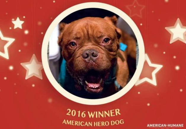 Hooch 2016 American Hero Dog