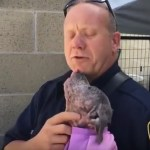 Firefighter Adopts Abandoned Pit Bull Puppy He Rescued