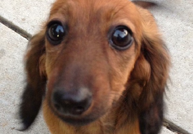 Grrr Jury Finds Petsmart Groomer Not Guilty In 2016 Death Of Dachshund
