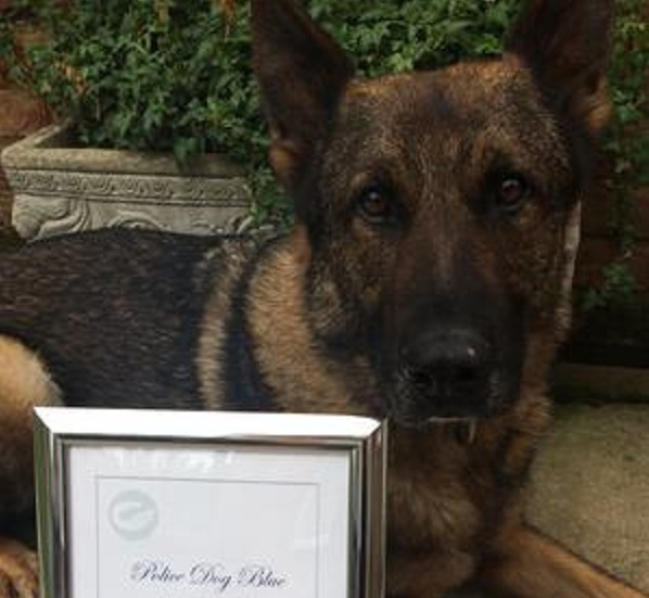 police dog Blue chased suspect