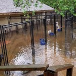 How to Help Animal Shelters and Rescues Affected by Hurricane Harvey