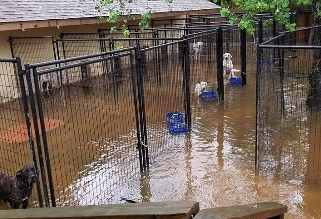 Hurricane Harvey in Texas floods kennels