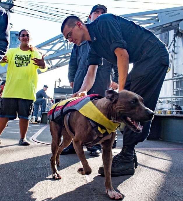 sailor greets dog rescued from being lost at sea