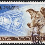 Laika, First Dog Astronaut, Made a One-Way Space Trip 60 Years Ago
