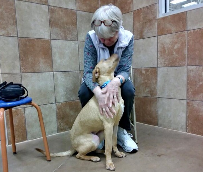 woman adopts dog with same heart condition