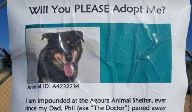 Dog park regular's owner died
