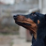 Firefighter Saves Dog's Life Day After Her Doberman Dies of Cancer